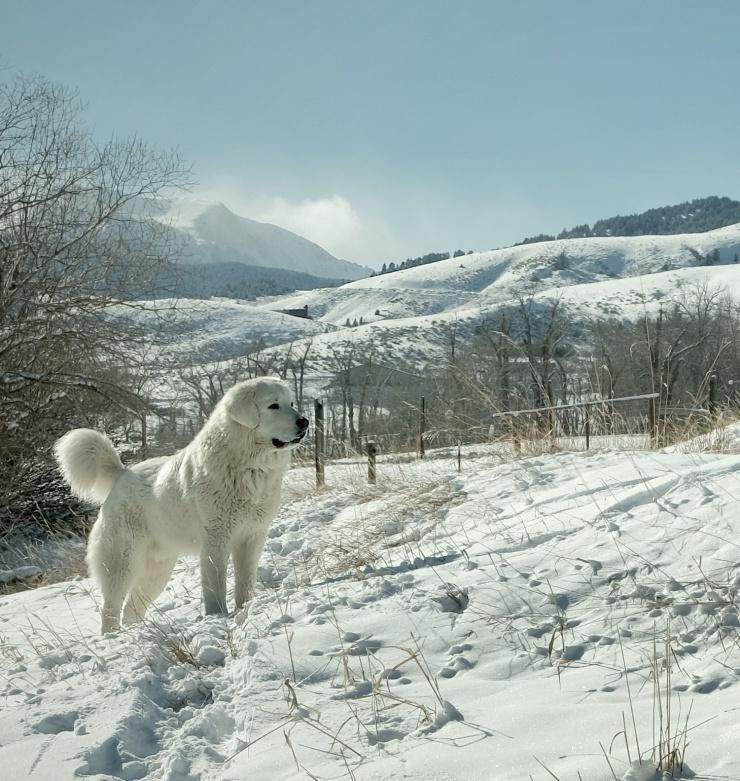 Luca snow king