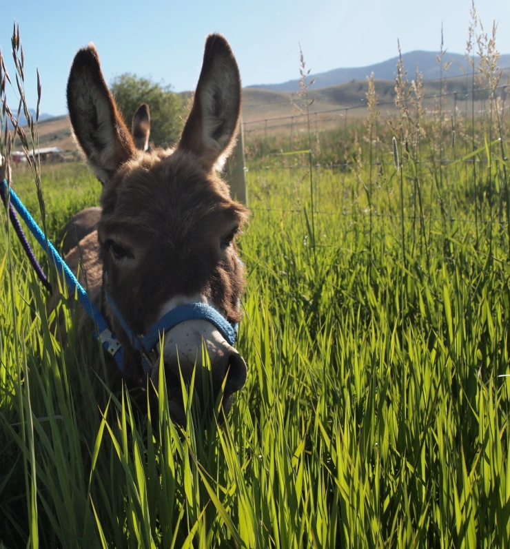 tall grass & Leanard